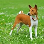 Собаки на Садоводе
