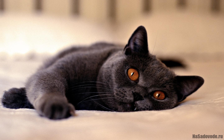 Кошки (коты) на Садоводе